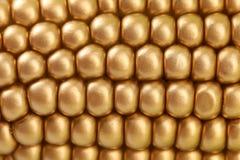 Fondo del maíz indio de oro. Cierre para arriba. Foto de archivo libre de regalías
