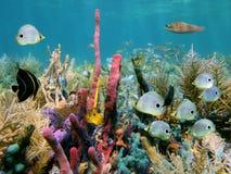 Fondo del mar colorido imagenes de archivo