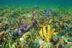 Fondo del mar colorido con las esponjas del mar en un arrecife de coral Foto de archivo
