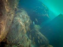 Fondo del mar con los pescados y las rocas imagen de archivo libre de regalías
