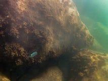Fondo del mar con los pescados y las rocas fotografía de archivo