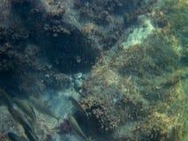 Fondo del mar con los pescados y las rocas foto de archivo