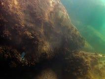 Fondo del mar con los pescados y las rocas imagen de archivo