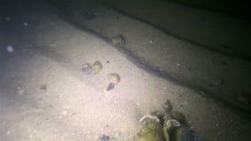 Fondo del mar de la noche almacen de metraje de vídeo