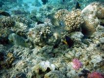Fondo del mar grande del arrecife de coral Fotografía de archivo
