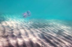 Fondo del mar, luz del sol, arena, con fotos de archivo