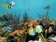 Fondo del mar tropical Imagen de archivo libre de regalías