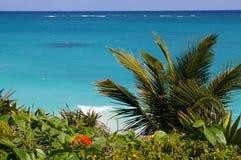 Fondo del mar y de la palmera Foto de archivo libre de regalías