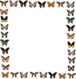 Fondo del marco de la mariposa Fotografía de archivo