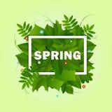 Fondo del marco de la primavera Imágenes de archivo libres de regalías