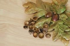 Fondo del mazzo della ghianda con le foglie della quercia Immagine Stock Libera da Diritti