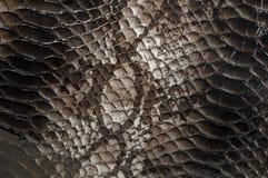 Fondo del modello della pelle di serpente Fotografia Stock
