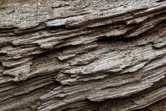 Fondo del modello del tronco di albero fotografia stock