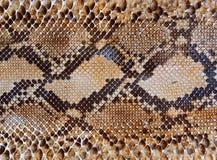 Fondo del modelo de la piel de serpiente imagenes de archivo