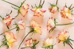 Fondo del modelo de las rosas Fotos de archivo