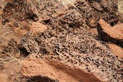 Fondo del monticello della termite Fotografia Stock Libera da Diritti