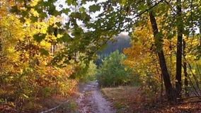 Fondo del movimiento del bosque del otoño almacen de metraje de vídeo
