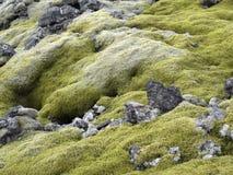 Fondo del musgo en la isla Foto de archivo libre de regalías