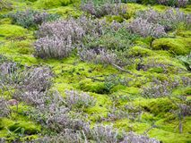 Fondo del musgo verde Imagenes de archivo