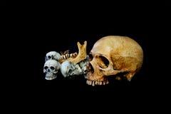 Fondo del negro del cráneo de muchas cabezas Fotografía de archivo libre de regalías