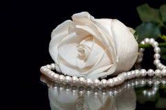 Fondo del nero della perla di Rosa bianca Immagini Stock