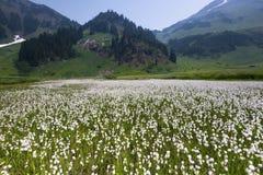 Fondo del noroeste pacífico de Washington State Hiking Climbing Landscape Waterscape Imágenes de archivo libres de regalías