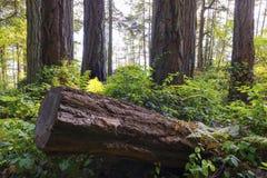 Fondo del noroeste pacífico del paisaje del océano del cielo del faro de Vancouver Imagenes de archivo