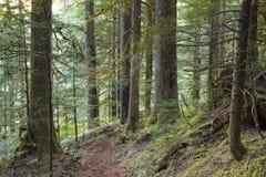 Fondo del noroeste pacífico del paisaje del océano del cielo del faro de Vancouver Fotos de archivo