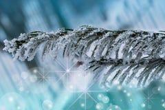 Fondo del nuovo anno e di Natale Ramo nella neve, gelo dell'albero di Natale su neve naturale, Fotografia Stock Libera da Diritti