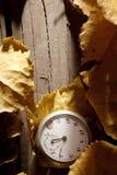 Fondo del otoño. Fotos de archivo libres de regalías