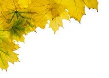 Fondo 1 del otoño fotografía de archivo