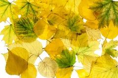 Fondo 2 del otoño foto de archivo libre de regalías