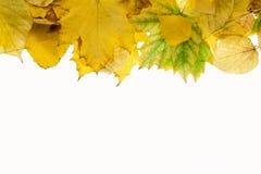 Fondo 4 del otoño Imágenes de archivo libres de regalías