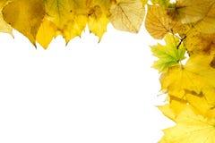 Fondo 6 del otoño foto de archivo