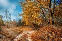 Fondo del otoño Fotos de archivo libres de regalías