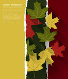 Fondo del otoño Foto de archivo libre de regalías
