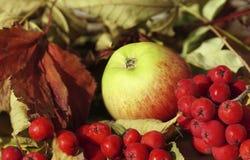 Fondo del otoño Apple y primer rojo del serbal de las bayas contra la perspectiva de las hojas de otoño Primer Foto de archivo libre de regalías