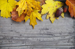 Fondo del otoño con el arce y hojas y bellotas del roble Imagen de archivo libre de regalías