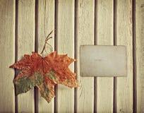 Fondo del otoño con la hoja de arce Imagenes de archivo