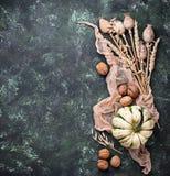 Fondo del otoño con las calabazas y las nueces Imagenes de archivo