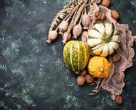Fondo del otoño con las calabazas y las nueces Foto de archivo libre de regalías