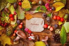 Fondo del otoño con las hojas, bayas, setas Imágenes de archivo libres de regalías