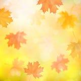 Fondo del otoño con las hojas caidas arce borrosas Fotografía de archivo