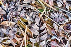 Fondo del otoño con las hojas caidas y la hierba marrón en escarcha Foto de archivo libre de regalías
