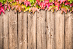 Fondo del otoño con las hojas coloreadas Fotos de archivo libres de regalías