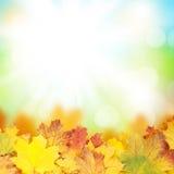 Fondo del otoño con las hojas de arce Imagen de archivo libre de regalías