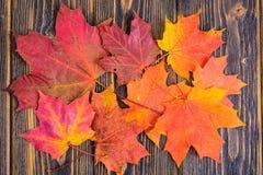 Fondo del otoño con las hojas de arce coloridas de la caída en la tabla de madera rústica Días de Acción de Gracias del concepto Imágenes de archivo libres de regalías