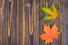 Fondo del otoño con las hojas de arce coloridas de la caída en la tabla de madera rústica Días de Acción de Gracias del concepto Imagen de archivo libre de regalías