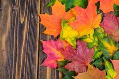 Fondo del otoño con las hojas de arce coloridas de la caída en la tabla de madera rústica Días de Acción de Gracias del concepto Imagen de archivo