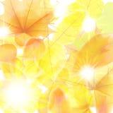 Fondo del otoño con las hojas de arce EPS10 más Imagenes de archivo